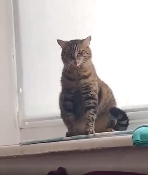 Котейка флексит